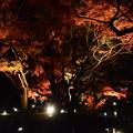 Photos: 紅葉のライトアップ
