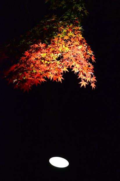夜闇に浮かぶ