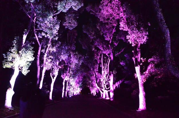 植物園のライトアップ