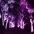 Photos: 植物園のライトアップ