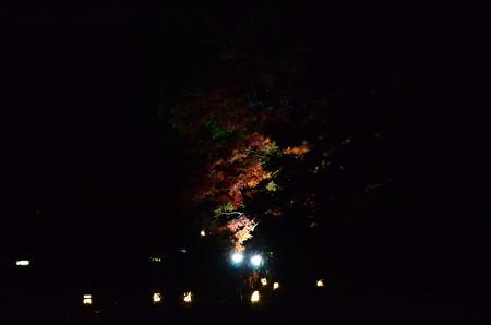温室脇のライトアップ