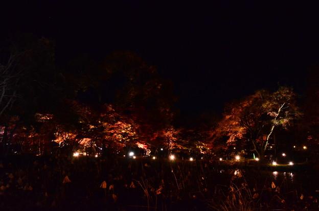 紅葉のライトアップ