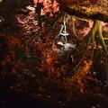 Photos: 水面の紅葉