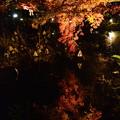 Photos: 池に映る