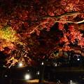 Photos: 夜空を染めて