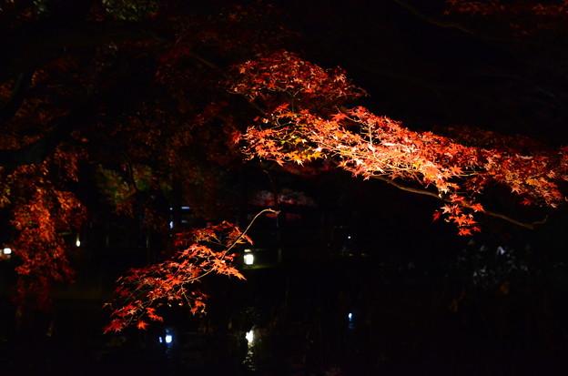 闇に浮かぶ紅葉