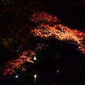 Photos: 闇に浮かぶ紅葉