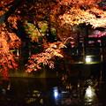 Photos: 池脇のライトアップ