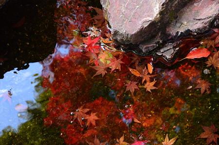 沈む紅葉、映るもみじに散るもみじ
