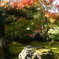 Photos: 苔のお庭を彩って