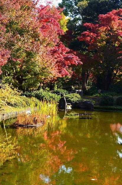 城南宮の紅葉景色