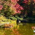 Photos: 城南宮の紅葉景色