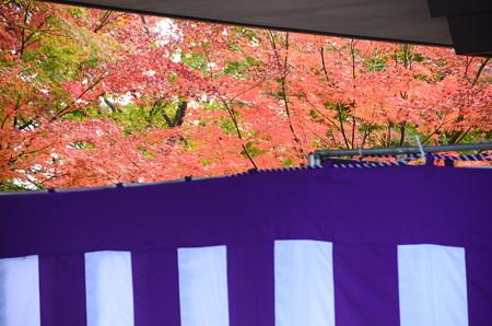 幔幕と紅葉