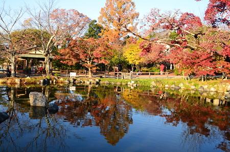 紅葉の円山公園