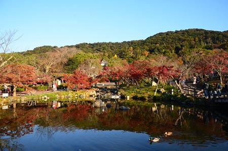 円山公園の秋景