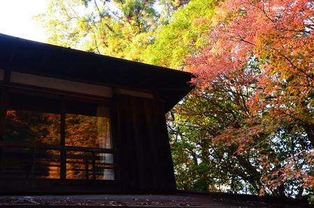 窓にも紅葉