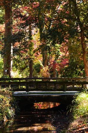 府立植物園の紅葉景色