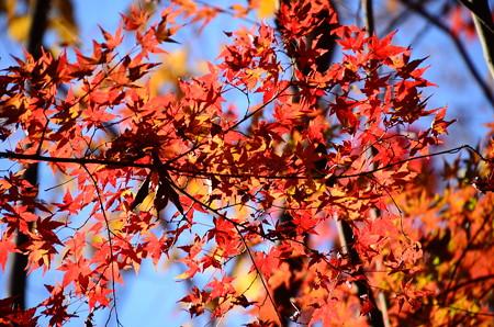 晩秋の空を染めて