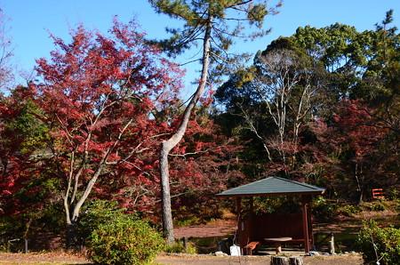 晩秋の府立植物園
