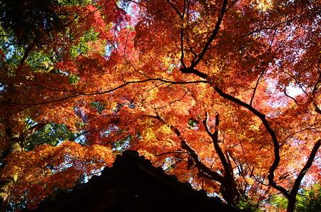 神明神社の色づき