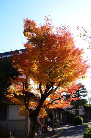 般若林の紅葉