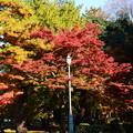 堺町御門脇の紅葉