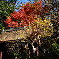 宗像神社の紅葉