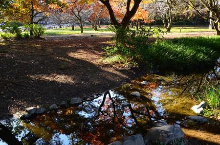 出水の小川の紅葉