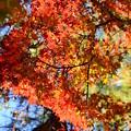 まだ鮮やかな紅葉