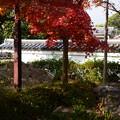 Photos: 萬福寺の紅葉