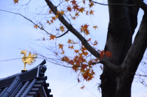 シンボルの鳳凰と~