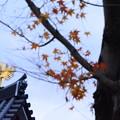 Photos: シンボルの鳳凰と~