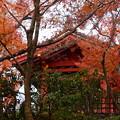 Photos: 鐘楼前の紅葉