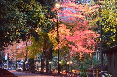宇治上神社脇の紅葉