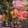 Photos: 宇治上神社脇の紅葉
