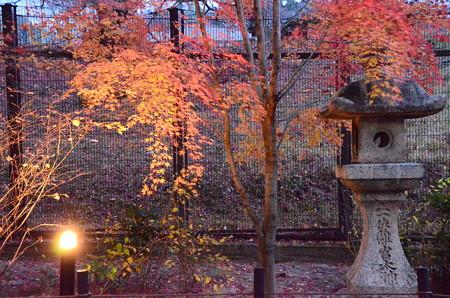 夕暮れの宇治上神社