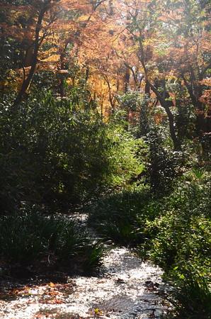 燦めく川面と紅葉