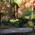 Photos: 生態園の色づき