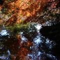Photos: 池に映る~