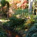 Photos: 生態園の紅葉