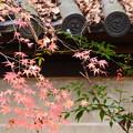 Photos: 紅葉と南天