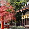 Photos: 下鴨神社の紅葉