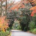 Photos: 西参道の紅葉