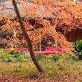 Photos: さる屋脇の紅葉