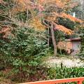 Photos: 明け橋奥の紅葉