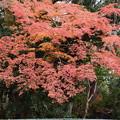 Photos: 近衛邸跡の紅葉
