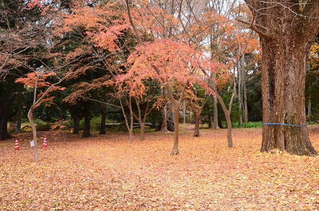 柔らかな秋色