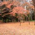 Photos: 柔らかな秋色
