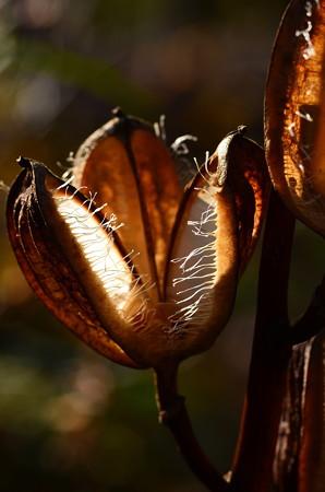食虫植物?