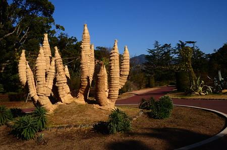 冬晴れの植物園